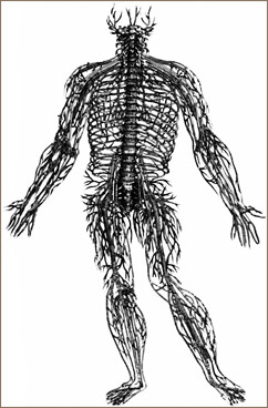 Chiropractic and the Nervous System