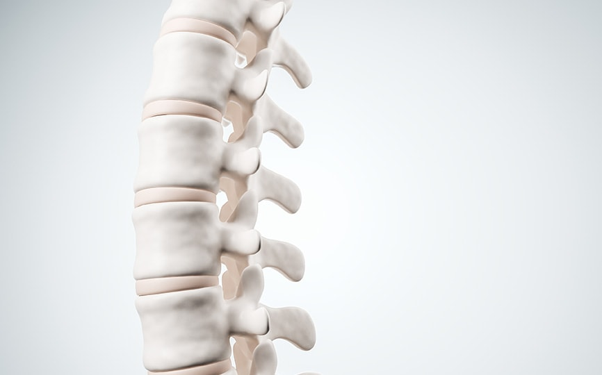 3D image of spine